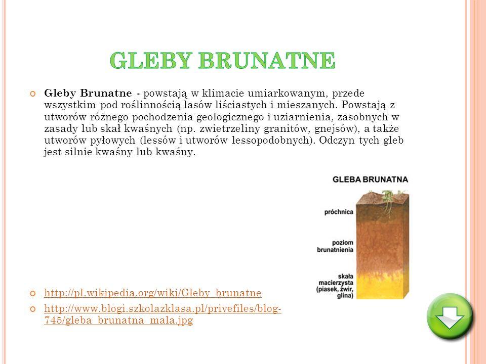 Gleby Brunatne - powstają w klimacie umiarkowanym, przede wszystkim pod roślinnością lasów liściastych i mieszanych. Powstają z utworów różnego pochod