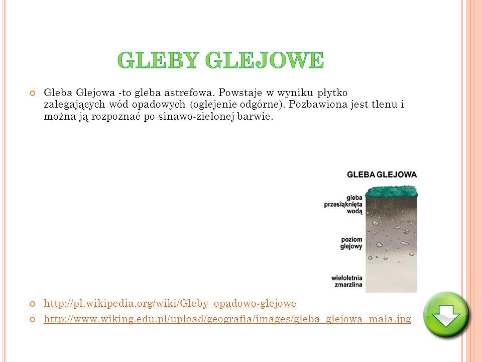 Gleba Glejowa -to gleba astrefowa. Powstaje w wyniku płytko zalegających wód opadowych (oglejenie odgórne). Pozbawiona jest tlenu i można ją rozpoznać