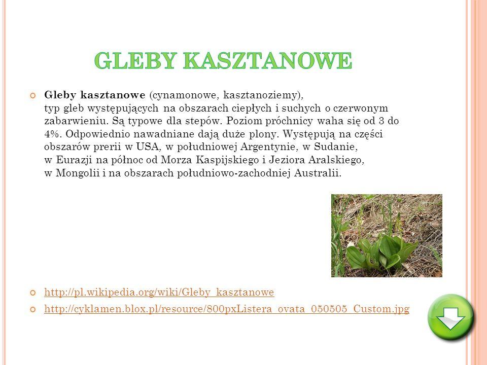 Gleby kasztanowe (cynamonowe, kasztanoziemy), typ gleb występujących na obszarach ciepłych i suchych o czerwonym zabarwieniu. Są typowe dla stepów. Po