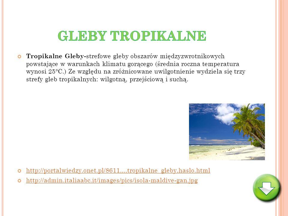 Tropikalne Gleby- strefowe gleby obszarów międzyzwrotnikowych powstające w warunkach klimatu gorącego (średnia roczna temperatura wynosi 25°C.) Ze wzg