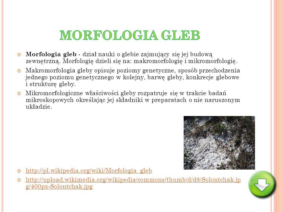 Morfologia gleb - dział nauki o glebie zajmujący się jej budową zewnętrzną. Morfologię dzieli się na: makromorfologię i mikromorfologię. Makromorfolog