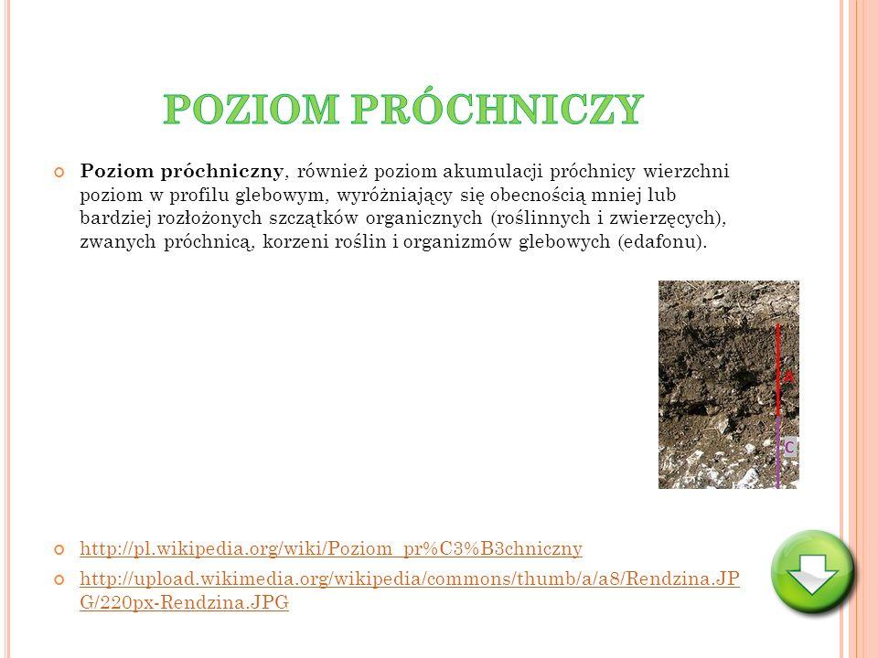 Poziom próchniczny, również poziom akumulacji próchnicy wierzchni poziom w profilu glebowym, wyróżniający się obecnością mniej lub bardziej rozłożonyc