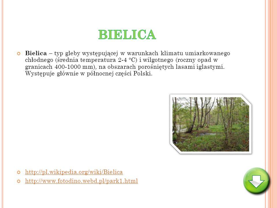 Bielica – typ gleby występującej w warunkach klimatu umiarkowanego chłodnego (średnia temperatura 2-4 °C) i wilgotnego (roczny opad w granicach 400-10