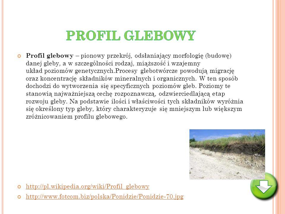 Profil glebowy – pionowy przekrój, odsłaniający morfologię (budowę) danej gleby, a w szczególności rodzaj, miąższość i wzajemny układ poziomów genetyc