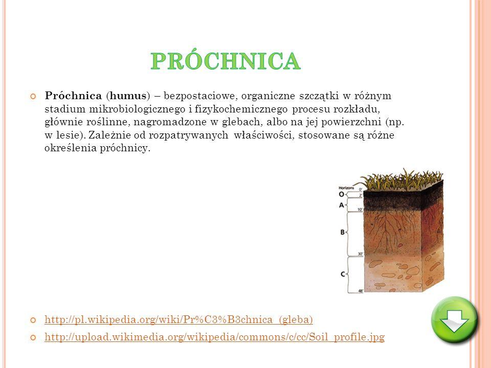 Próchnica ( humus ) – bezpostaciowe, organiczne szczątki w różnym stadium mikrobiologicznego i fizykochemicznego procesu rozkładu, głównie roślinne, n