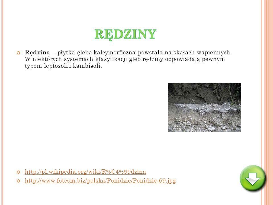 Rędzina – płytka gleba kalcymorficzna powstała na skałach wapiennych. W niektórych systemach klasyfikacji gleb rędziny odpowiadają pewnym typom leptos