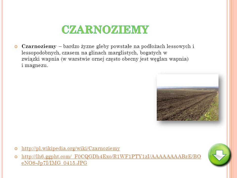 Czarnoziemy – bardzo żyzne gleby powstałe na podłożach lessowych i lessopodobnych, czasem na glinach marglistych, bogatych w związki wapnia (w warstwi