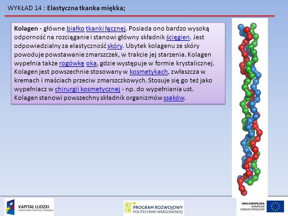 WYKŁAD 14 : Elastyczna tkanka miękka; Kolagen - główne białko tkanki łącznej. Posiada ono bardzo wysoką odporność na rozciąganie i stanowi główny skła
