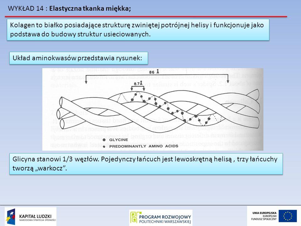 WYKŁAD 14 : Elastyczna tkanka miękka; Kolagen to białko posiadające strukturę zwiniętej potrójnej helisy i funkcjonuje jako podstawa do budowy struktu
