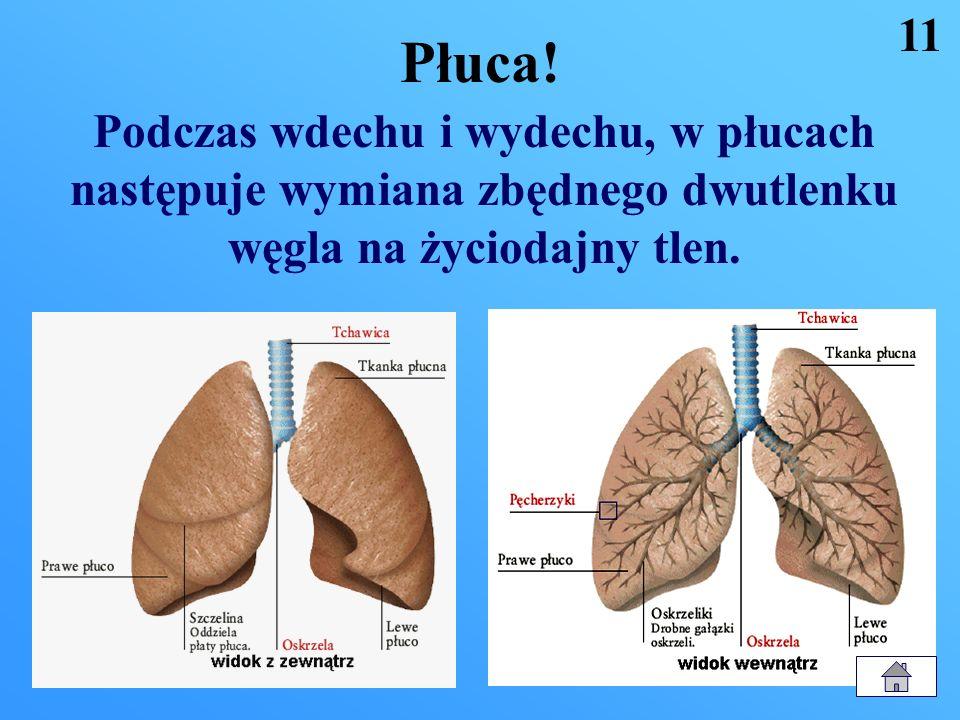 Układ oddechowy! 1. Dostarcza organizmowi powietrze z tlenem 2. Wydala z organizmu dwutlenek węgla 3. Budowa: jama nosowa jama ustna krtań tchawica pł