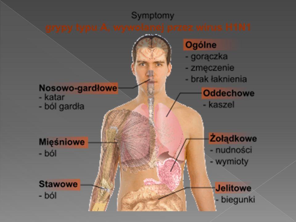 Według specjalistów świńska grypa (wirus A/H1N1) nie jest bardziej niebezpieczniejsza - od zwykłej grypy sezonowej, która do 22 grudnia dotknęła blisko dwieście tys.