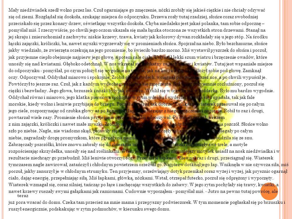 Mały niedźwiadek szedł wolno przez las. Czuł ogarniające go zmęczenie, nóżki zrobiły się jakieś ciężkie i nie chciały odrywać się od ziemi. Rozglądał