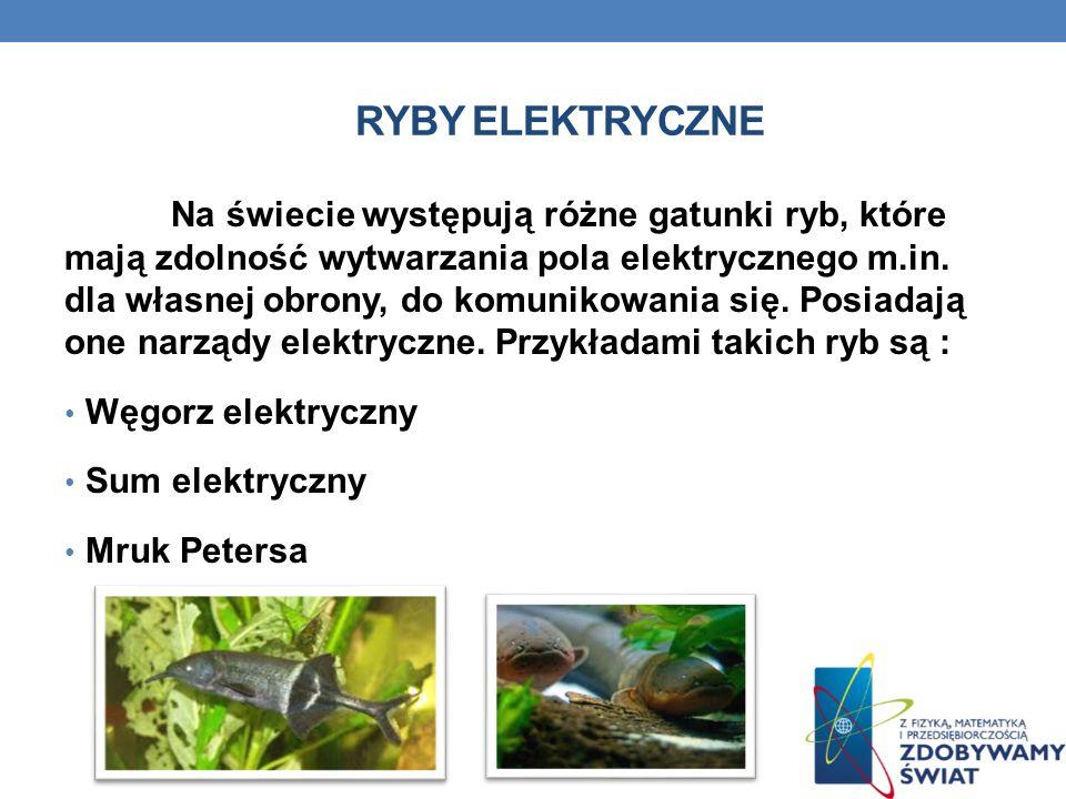 RYBY ELEKTRYCZNE Na świecie występują różne gatunki ryb, które mają zdolność wytwarzania pola elektrycznego m.in. dla własnej obrony, do komunikowania