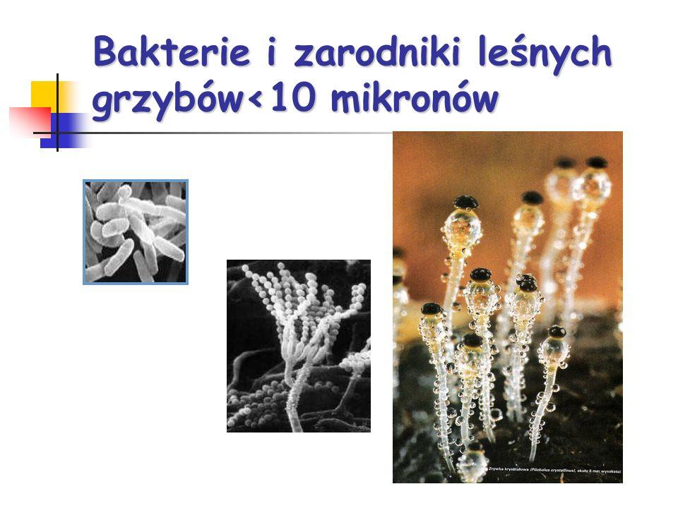 Bakterie i zarodniki leśnych grzybów<10 mikronów