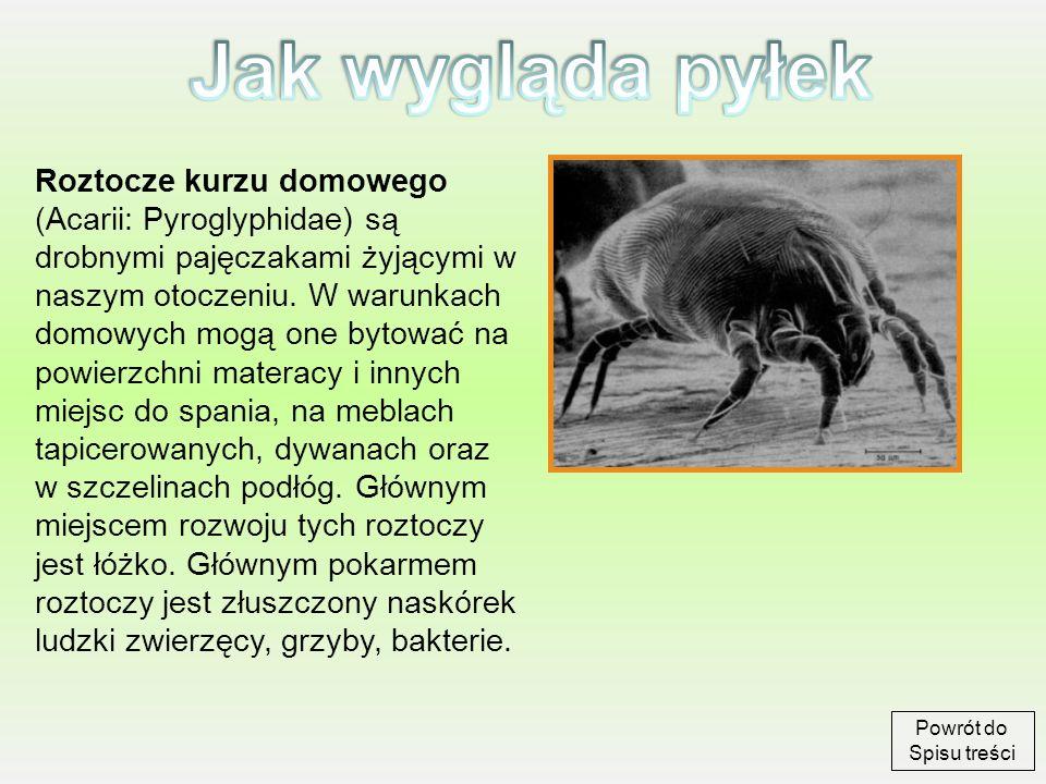 Roztocze kurzu domowego (Acarii: Pyroglyphidae) są drobnymi pajęczakami żyjącymi w naszym otoczeniu. W warunkach domowych mogą one bytować na powierzc