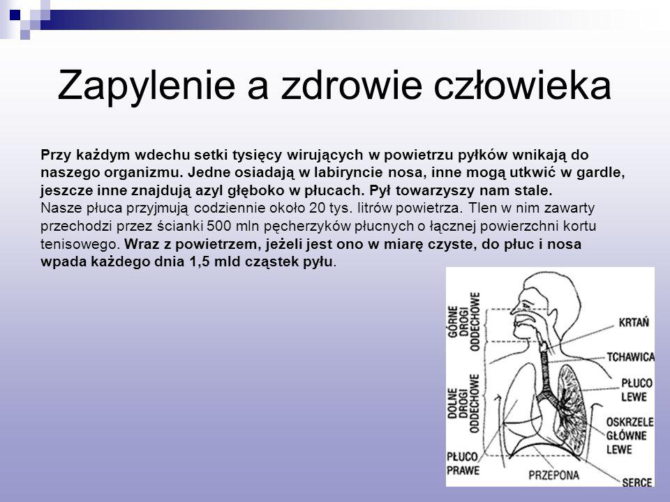 Zapylenie a zdrowie człowieka Przy każdym wdechu setki tysięcy wirujących w powietrzu pyłków wnikają do naszego organizmu.
