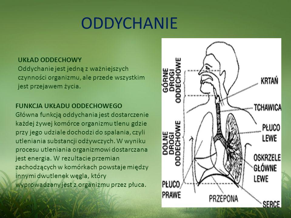 ODDYCHANIE FUNKCJA UKŁADU ODDECHOWEGO Główna funkcją oddychania jest dostarczenie każdej żywej komórce organizmu tlenu gdzie przy jego udziale dochodz