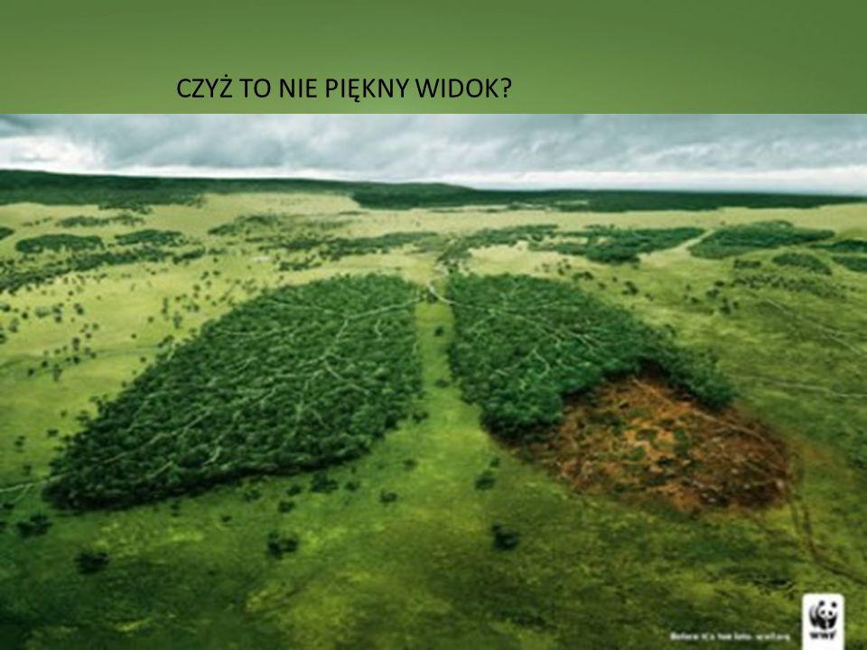 Obszar funkcjonalny Zielone Płuca Polski (ZPP) znajduje si ę w północno-wschodniej cz ęś ci kraju, a jego powierzchnia wynosi 63 234 km2, co stanowi 20,2% powierzchni Polski.