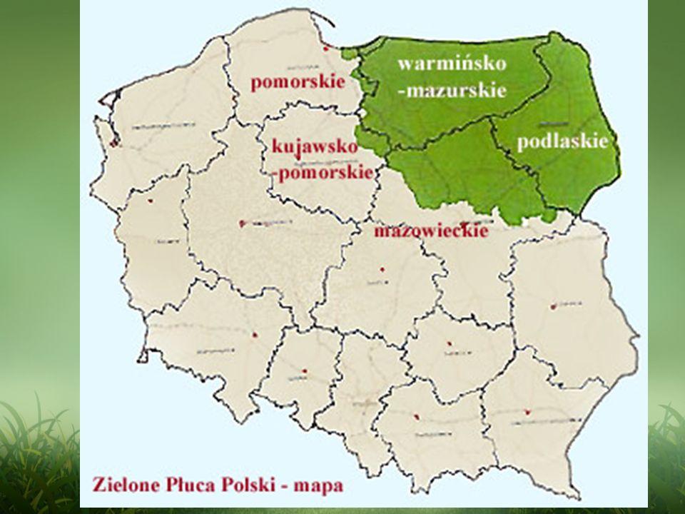 Zielone Płuca Polski są unikatowym obszarem, który może stać się polskim swoistym towarem eksportowym.