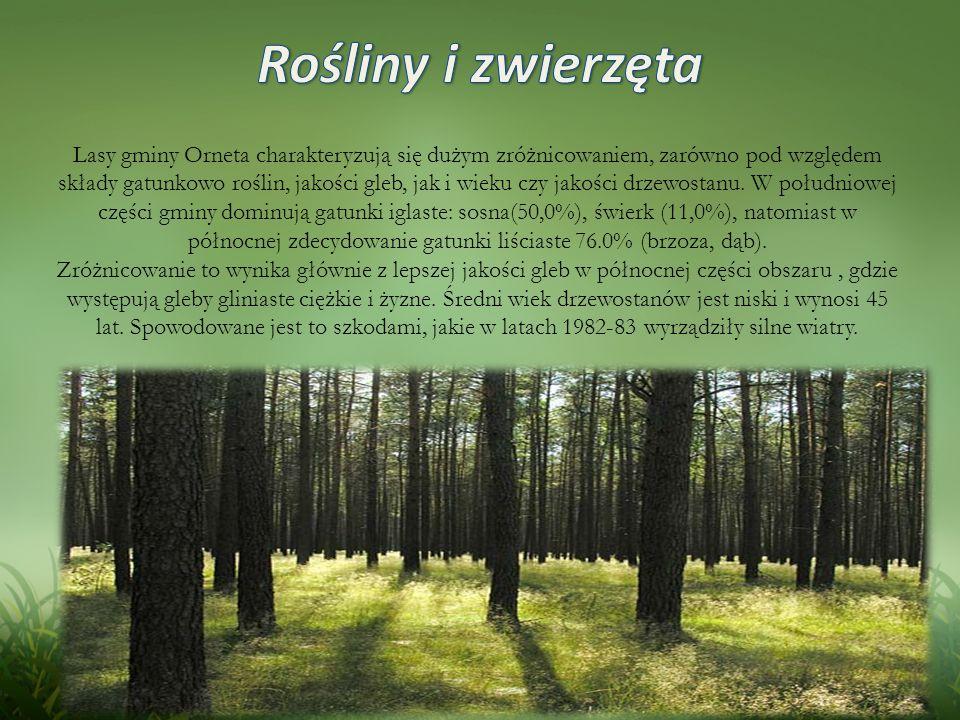 Lasy gminy Orneta charakteryzują się dużym zróżnicowaniem, zarówno pod względem składy gatunkowo roślin, jakości gleb, jak i wieku czy jakości drzewostanu.