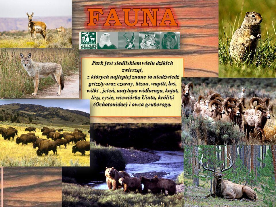 Park jest siedliskiem wielu dzikich zwierząt, z których najlepiej znane to niedźwiedź grizzly oraz czarny, bizon, wapiti, łoś, wilki, jeleń, antylopa