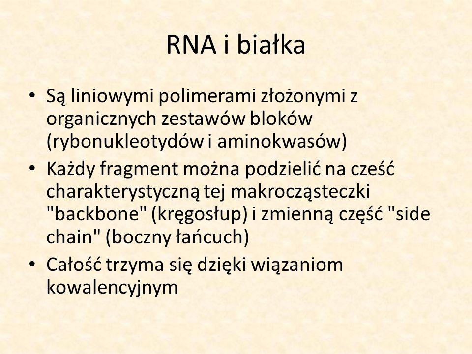 RNA i białka Są liniowymi polimerami złożonymi z organicznych zestawów bloków (rybonukleotydów i aminokwasów) Każdy fragment można podzielić na cześć charakterystyczną tej makrocząsteczki backbone (kręgosłup) i zmienną część side chain (boczny łańcuch) Całość trzyma się dzięki wiązaniom kowalencyjnym