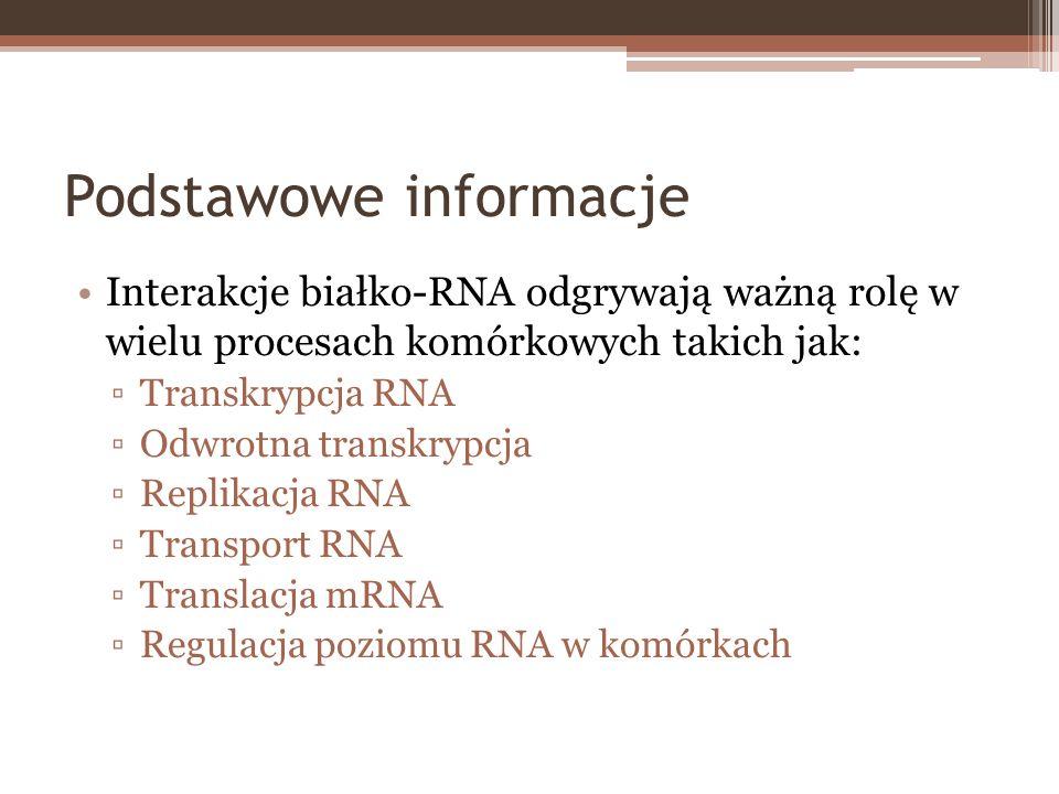 Podstawowe informacje Interakcje białko-RNA odgrywają ważną rolę w wielu procesach komórkowych takich jak: Transkrypcja RNA Odwrotna transkrypcja Repl