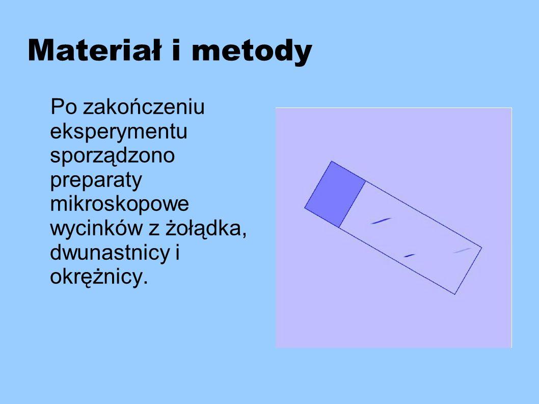 Materiał i metody Po zakończeniu eksperymentu sporządzono preparaty mikroskopowe wycinków z żołądka, dwunastnicy i okrężnicy.