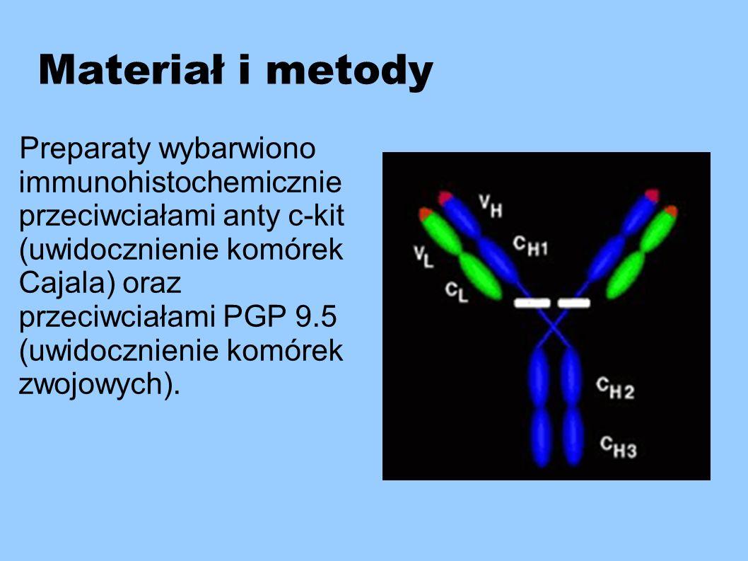 Materiał i metody Preparaty wybarwiono immunohistochemicznie przeciwciałami anty c-kit (uwidocznienie komórek Cajala) oraz przeciwciałami PGP 9.5 (uwi