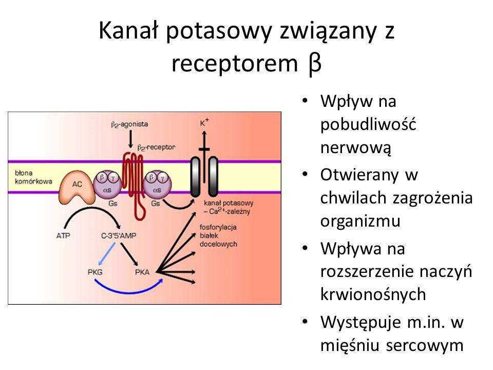 Kanał potasowy związany z receptorem β Wpływ na pobudliwość nerwową Otwierany w chwilach zagrożenia organizmu Wpływa na rozszerzenie naczyń krwionośnych Występuje m.in.