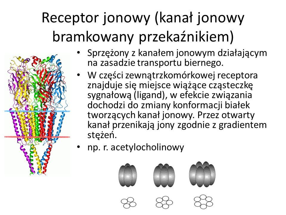 Receptor jonowy (kanał jonowy bramkowany przekaźnikiem) Sprzężony z kanałem jonowym działającym na zasadzie transportu biernego.