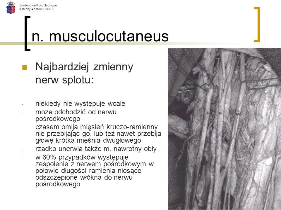 Studenckie Koło Naukowe Katedry Anatomii CM UJ n. musculocutaneus Najbardziej zmienny nerw splotu: - niekiedy nie występuje wcale - może odchodzić od