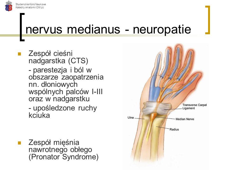 Studenckie Koło Naukowe Katedry Anatomii CM UJ nervus medianus - neuropatie Zespół cieśni nadgarstka (CTS) - parestezja i ból w obszarze zaopatrzenia
