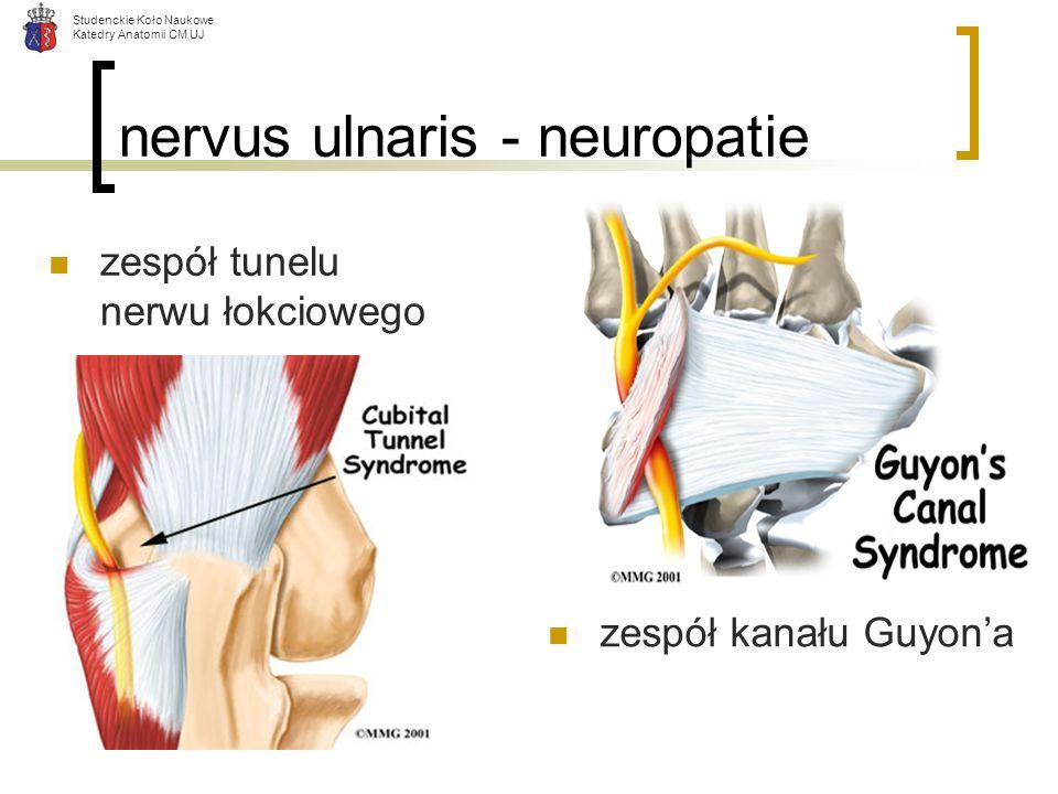 Studenckie Koło Naukowe Katedry Anatomii CM UJ nervus ulnaris - neuropatie zespół kanału Guyona zespół tunelu nerwu łokciowego
