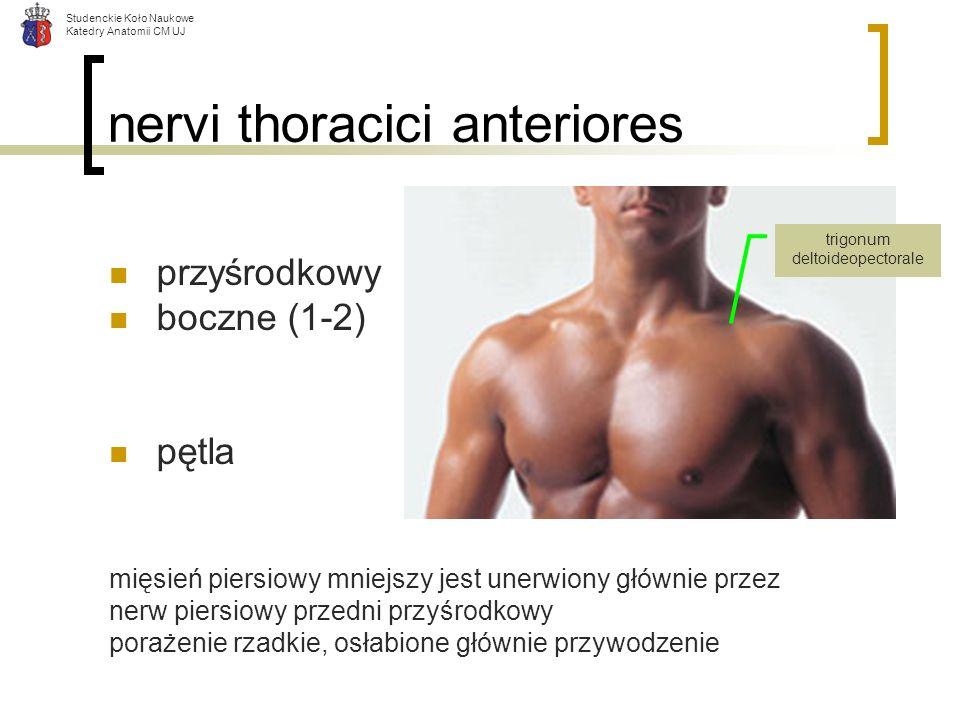 Studenckie Koło Naukowe Katedry Anatomii CM UJ nervi thoracici anteriores przyśrodkowy boczne (1-2) pętla mięsień piersiowy mniejszy jest unerwiony gł