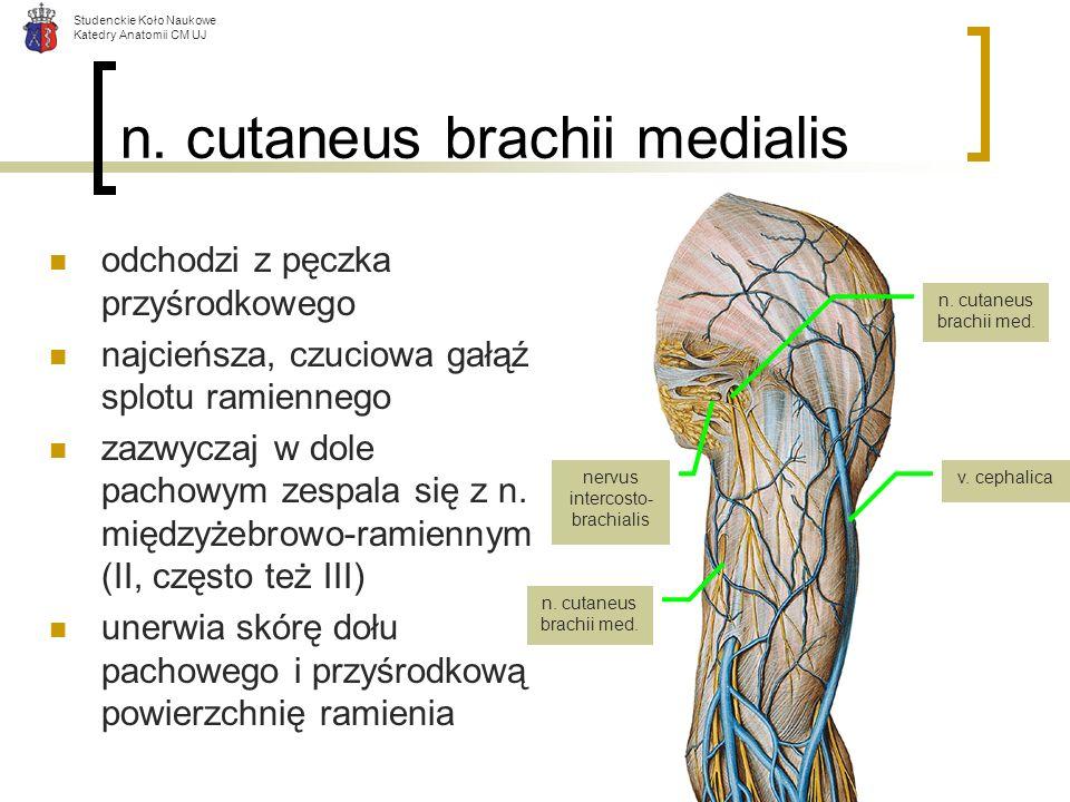 Studenckie Koło Naukowe Katedry Anatomii CM UJ n. cutaneus brachii medialis odchodzi z pęczka przyśrodkowego najcieńsza, czuciowa gałąź splotu ramienn