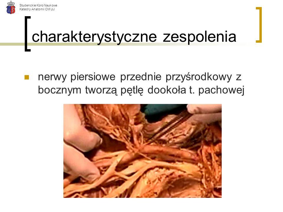 Studenckie Koło Naukowe Katedry Anatomii CM UJ charakterystyczne zespolenia nerwy piersiowe przednie przyśrodkowy z bocznym tworzą pętlę dookoła t. pa