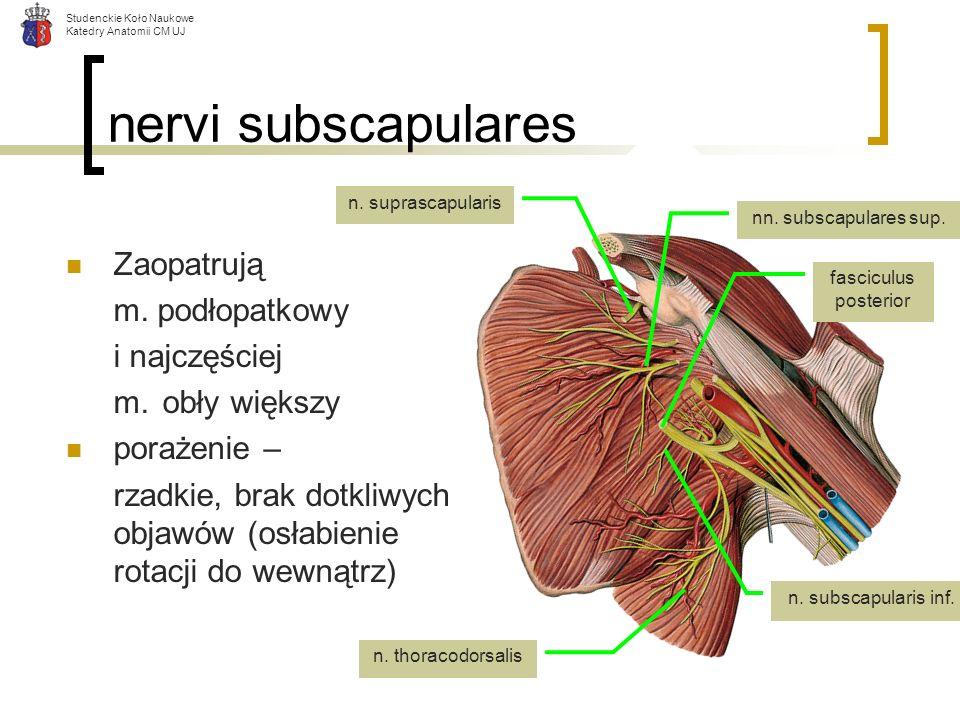 Studenckie Koło Naukowe Katedry Anatomii CM UJ nervi subscapulares Zaopatrują m. podłopatkowy i najczęściej m.obły większy porażenie – rzadkie, brak d