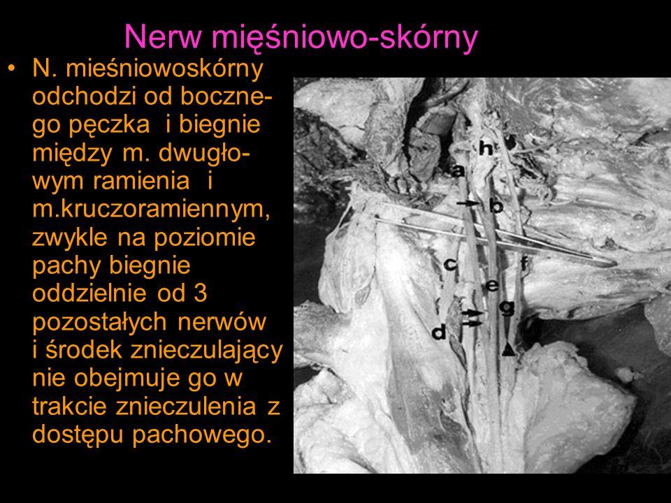Nerw mięśniowo-skórny N.mieśniowoskórny odchodzi od boczne- go pęczka i biegnie między m.