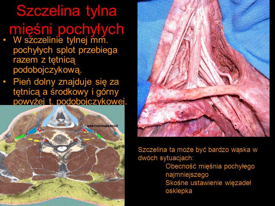 Szczelina tylna mięśni pochyłych W szczelinie tylnej mm.