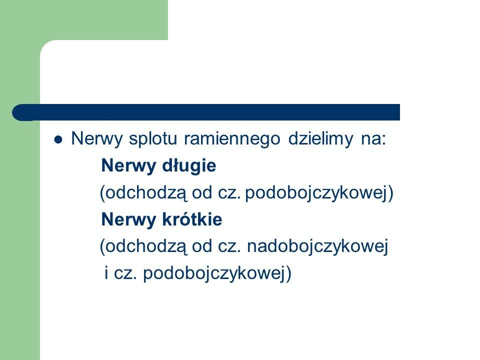 Nerwy splotu ramiennego dzielimy na: Nerwy długie (odchodzą od cz.podobojczykowej) Nerwy krótkie (odchodzą od cz. nadobojczykowej i cz. podobojczykowe