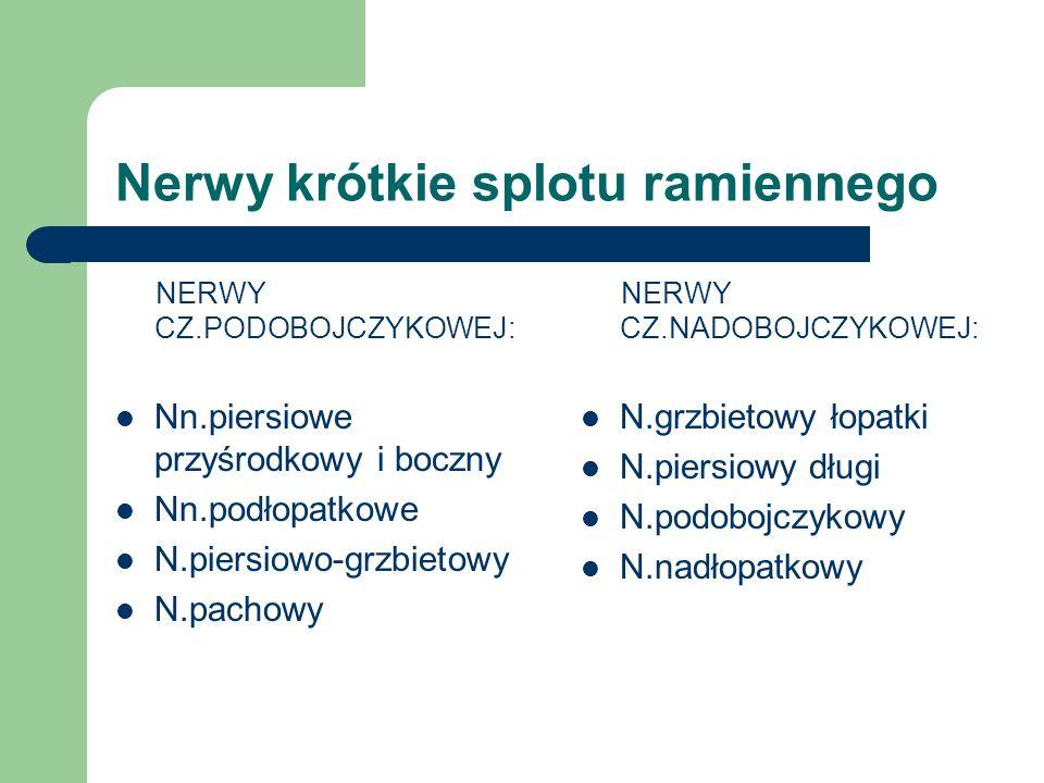 Nerwy krótkie splotu ramiennego NERWY CZ.PODOBOJCZYKOWEJ: Nn.piersiowe przyśrodkowy i boczny Nn.podłopatkowe N.piersiowo-grzbietowy N.pachowy NERWY CZ