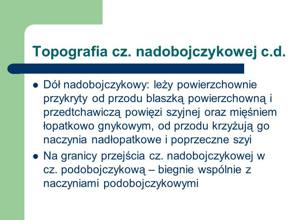 Topografia cz. nadobojczykowej c.d. Dół nadobojczykowy: leży powierzchownie przykryty od przodu blaszką powierzchowną i przedtchawiczą powięzi szyjnej