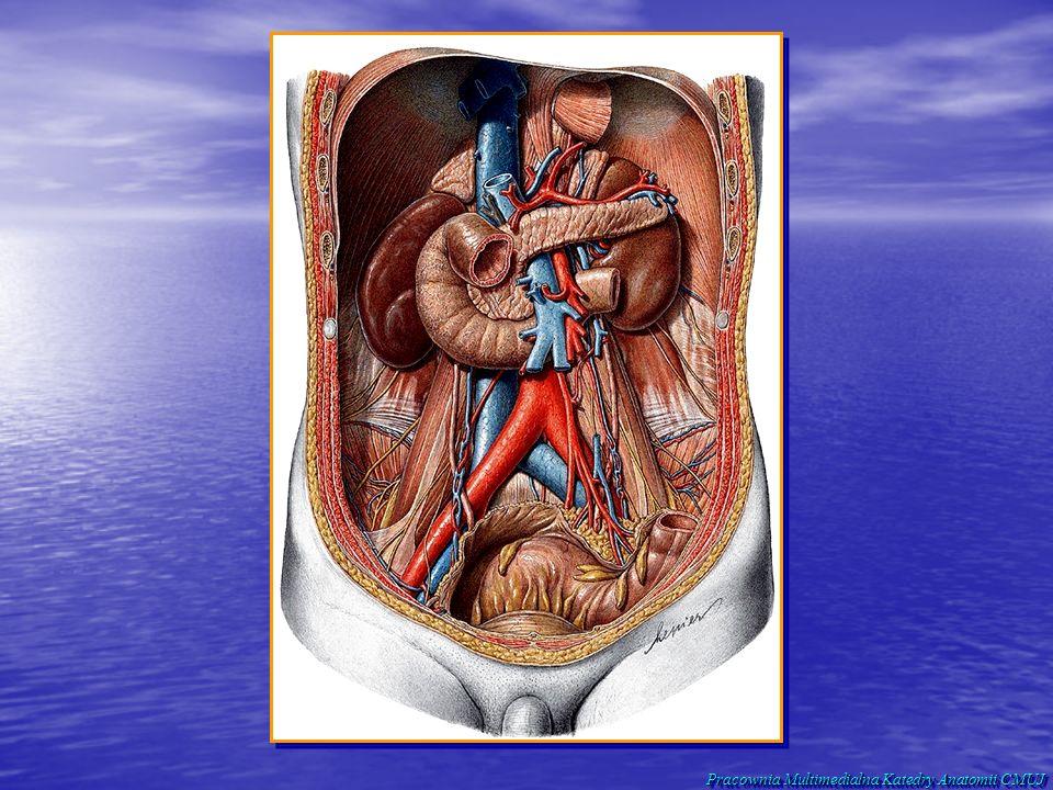 Pracownia Multimedialna Katedry Anatomii CMUJ
