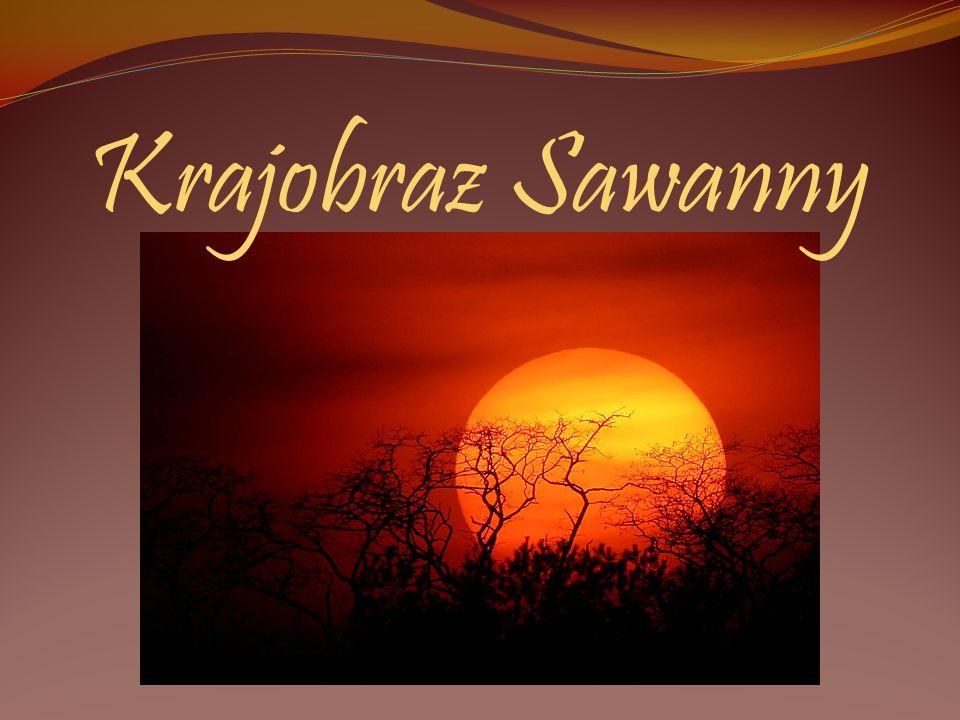 Krajobraz Sawanny