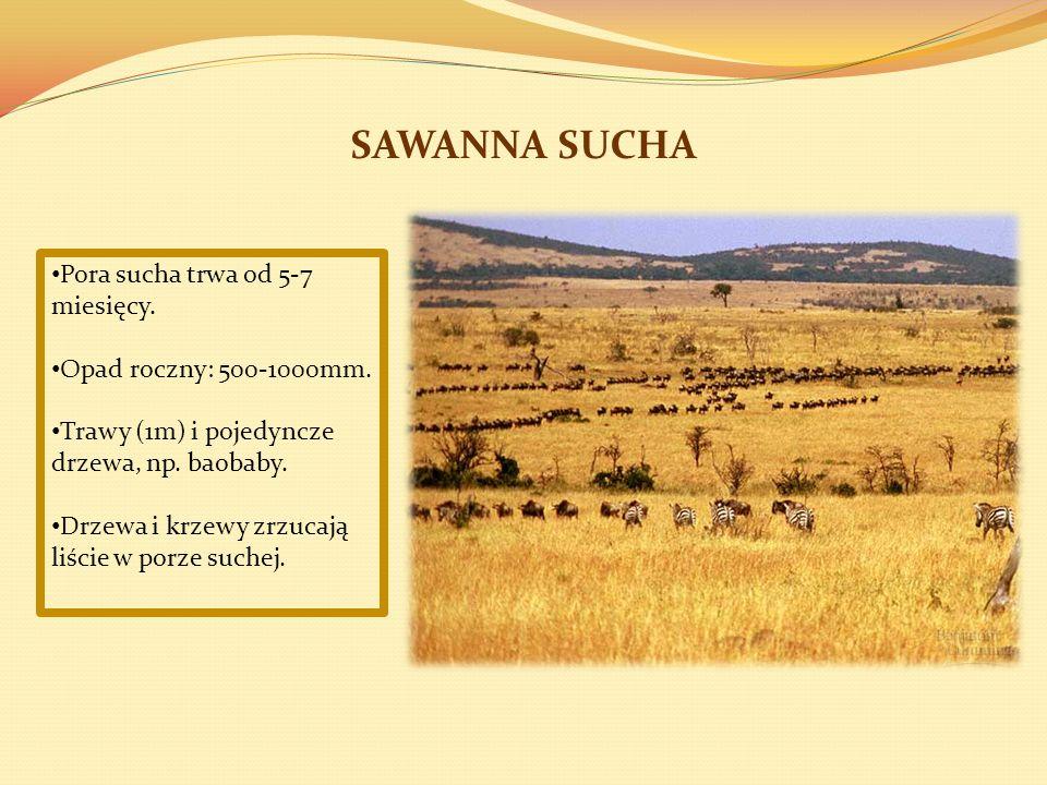SAWANNA SUCHA Pora sucha trwa od 5-7 miesięcy.Opad roczny: 500-1000mm.