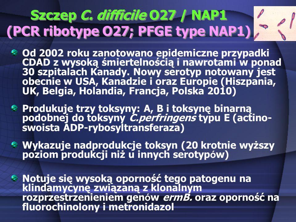 Szczep C. difficile O27 / NAP1 (PCR ribotype O27; PFGE type NAP1) Od 2002 roku zanotowano epidemiczne przypadki CDAD z wysoką śmiertelnością i nawrota