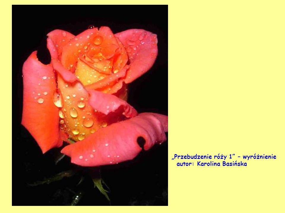 Południe w Wolińskim Parku Narodowym wyróżnienie - autor: Krystyna Walińska We dwoje – wyróżnienie autor: Marta Ostafińska