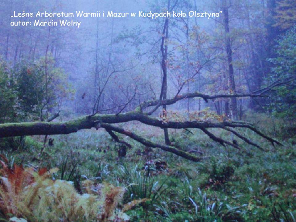W lesie niedaleko Gunsty-Szwecja autor: Michał Masow Las niedaleko Gunsty-Szwecja autor: Michał Masow
