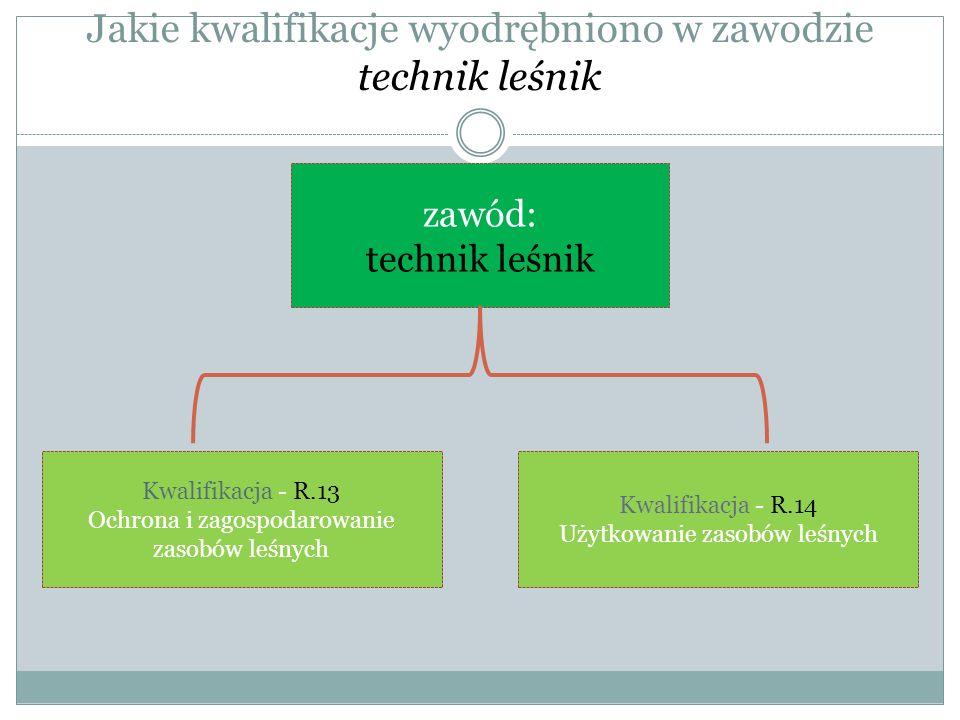 Jakie kwalifikacje wyodrębniono w zawodzie technik leśnik zawód: technik leśnik Kwalifikacja - R.13 Ochrona i zagospodarowanie zasobów leśnych Kwalifi